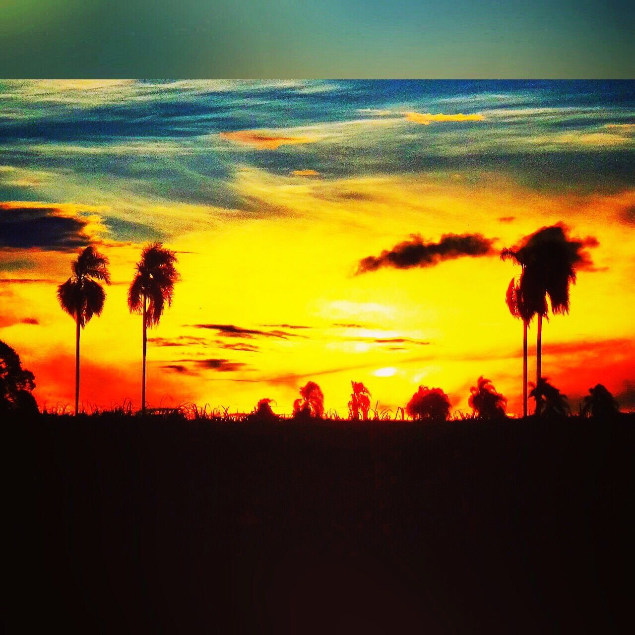 sunset, silhouette, beauty in nature, nature, tranquil scene, sky, scenics, orange color, tranquility, plant, growth, field, no people, outdoors, landscape, cloud - sky, palm tree, tree, flower, day