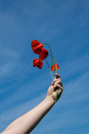 Low angle view of hand holding red flowering plant against blue sky