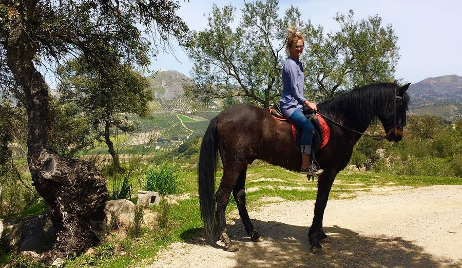 Riding Andalusia Olive Grove Horse Riding Rural Andalusia Horses Dream Horse Andalucia Horses Riding Andalusia