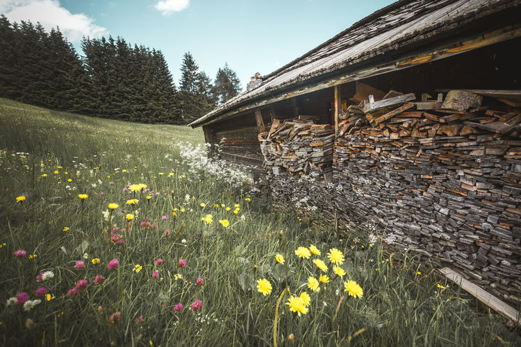 Flower Flowering Plant Plant Growth Nature Freshness No People Beauty In Nature Built Structure Day Land Fragility Architecture Yellow Field Vulnerability  Outdoors Tree Sky Building Exterior Wood Flowers Wood House Trees Trunk Tree