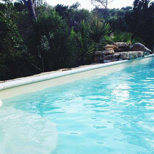 Water Enjoying The Sun Nature Swimming Pool