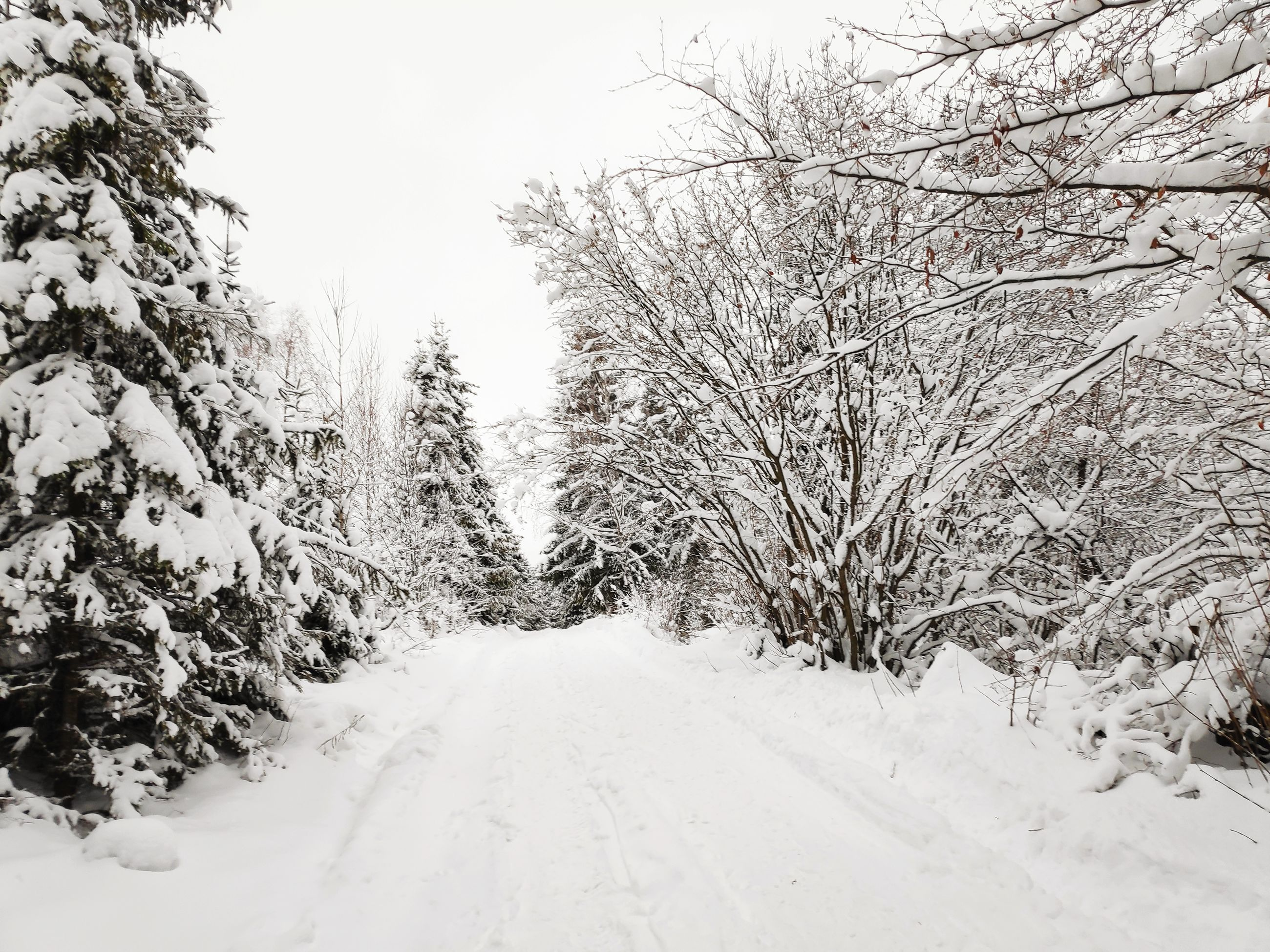 snow, cold temperature, tree, winter, plant, covering, beauty in nature, bare tree, scenics - nature, tranquility, white color, tranquil scene, the way forward, no people, nature, direction, sky, non-urban scene, road, outdoors, diminishing perspective, extreme weather, snowcapped mountain, snowing