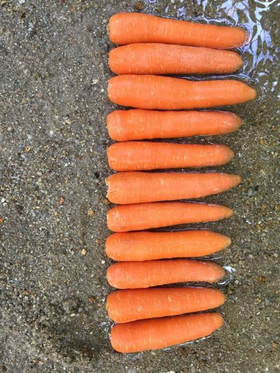 Line up Food Food And Drink Freshness Healthy Eating In A Row Arrangement High Angle View Side By Side Order Vegetable Table Orange Color Still Life Seafood No People Wellbeing Raw Food Carrot Directly Above Root Vegetable