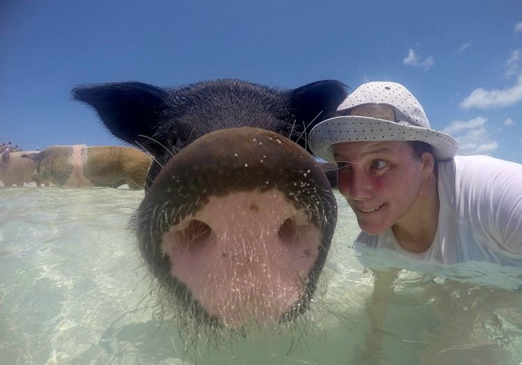 EyeEm Of The Week Exuma Enjoying Life Looking At Camera Portrait Travellover Pupparazzi Traveling Happiness Friendship Exuma Cays Live For The Story Bahamas The Portraitist - 2017 EyeEm Awards The Great Outdoors - 2017 EyeEm Awards Beach Life Swimming Pig Reiselust Close-up Swimming Pigs Bahamas Swimming Pigs Swimming Beach Time Couple - Relationship Nature Place Of Heart The Photojournalist - 2017 EyeEm Awards Sommergefühle Pet Portraits Done That. Connected By Travel Second Acts An Eye For Travel Love Yourself Go Higher Inner Power Summer Exploratorium #FREIHEITBERLIN The Traveler - 2018 EyeEm Awards The Portraitist - 2018 EyeEm Awards Love Is Love