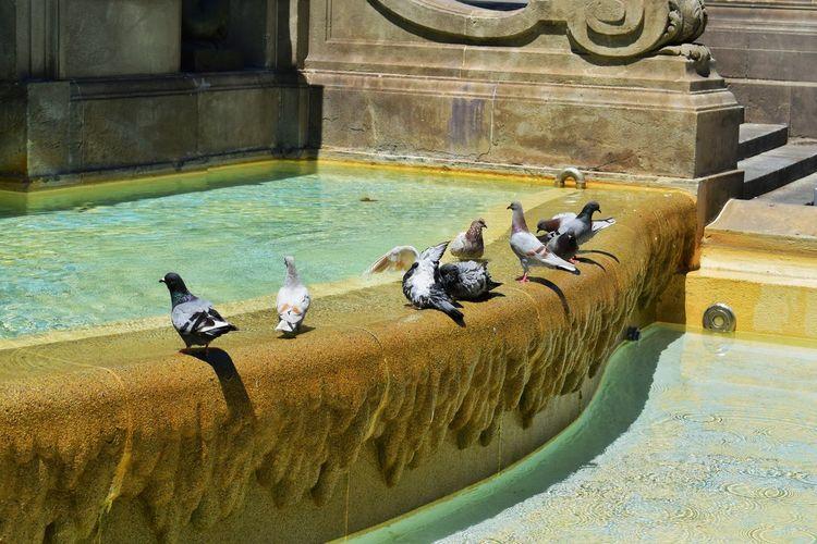 Birds perching in water