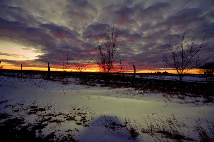 Sunset study Village of Western, Saline County Nebraska January 2018 Camera Work EyeEm Best Shots EyeEm Gallery FUJIFILM X-T1 Farmland Fujinon 10-24mm F4 Rural America Sunset Silhouettes Sunset Study Sunset_collection Visual Journal White Balance Effect Winter Always Taking Photos Bare Tree Beauty In Nature Cloud - Sky Cold Temperature Day Landscape My Neighborhood Nature Nebraska Sunsets  No People Outdoors Photo Diary Photography Practicing Photography Rural Landscape Rural Life Rural Scene S.ramos January 2018 Scenics Sky Snow Sunset Tranquil Scene Tranquility Tree Weather Winter