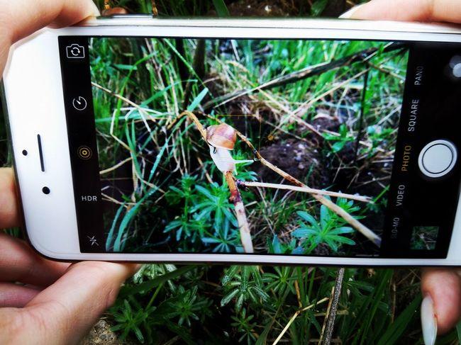 Snails Animals Save Animals Nature Nature Photography Iphone6s Close-up
