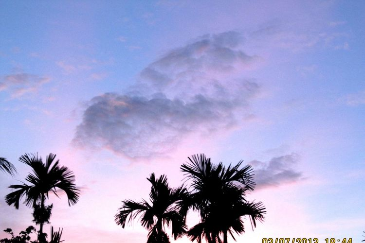 Cloud like bird.. Simple Beauty Palm Tree Live For The Story Silhouette Sunset Tranquility Beauty In Nature Coconut Sky Cloud - Sky Tree Outdoors Nature Blue No People Tree Trunk Scenics Day Close-up
