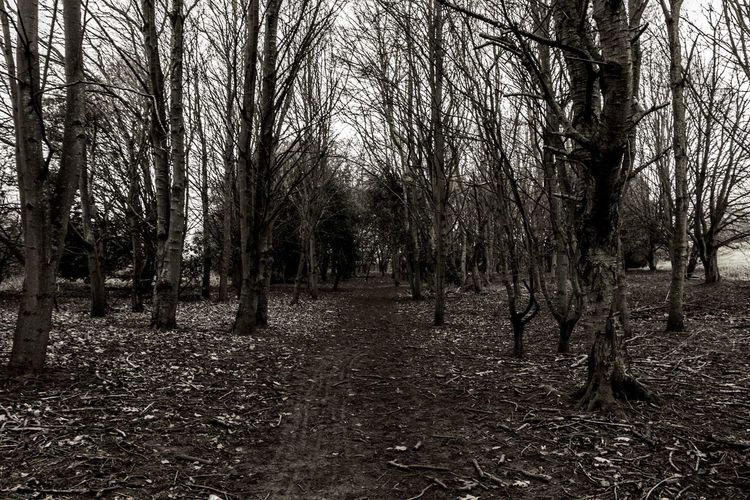 Trees Forrest Photography Forrest Hidden Path Cold Leaves Dark Lonelypath