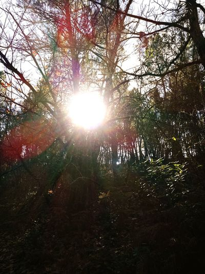 Forest Beauty In Nature Sunlight Huelva, Spain Fuenteheridos Nature Tranquility