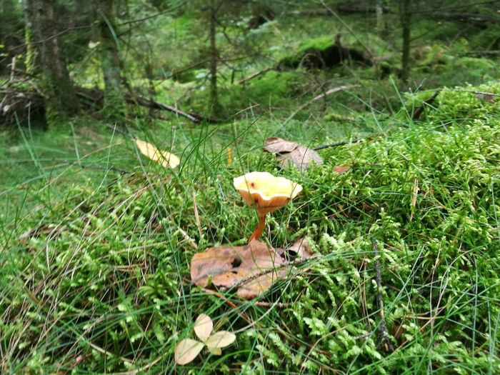 Hiking Adventure Fly Agaric Fly Agaric Mushroom Toadstool Fungus Mushroom Forest Field Leaf Tree High Angle View