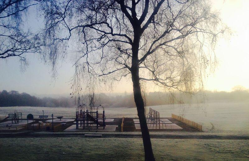 Birmingham morning Sunshine ☀ Tree And Sky park Park