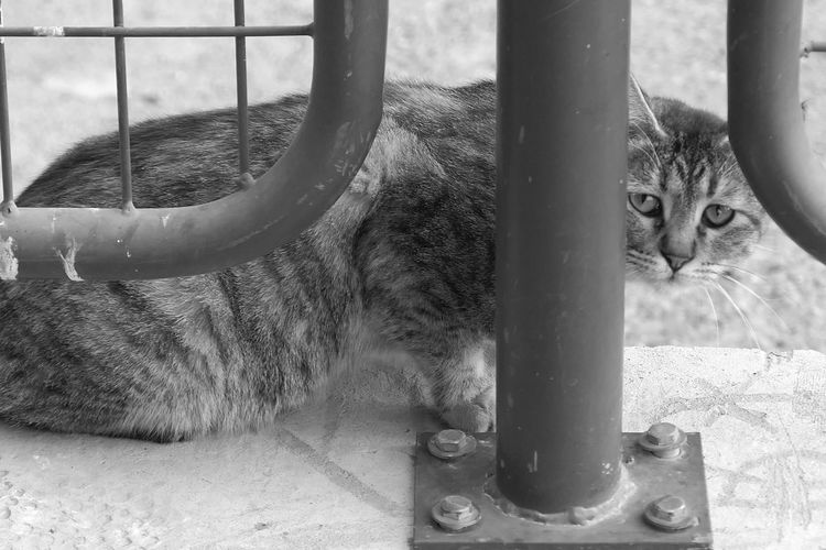 City Street Photography Animal Themes One Animal Cat Feline Animal Mammal Domestic Cat No People Pets Day Domestic Animals Metal Barrier Boundary Looking At Camera Outdoors