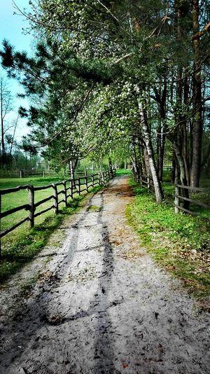 beauty in nature 🌳 :-) Polska Zwierzyniec Polskajestpiekna Beauty In Nature First Eyeem Photo Tree Day The Way Forward Grass Sky
