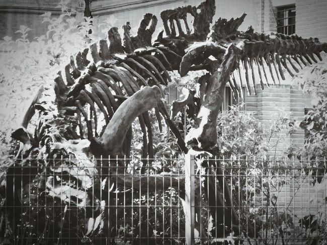 Et si j'étais vivant? Squelette Dinosaure Museum Of Natural History Toulouse