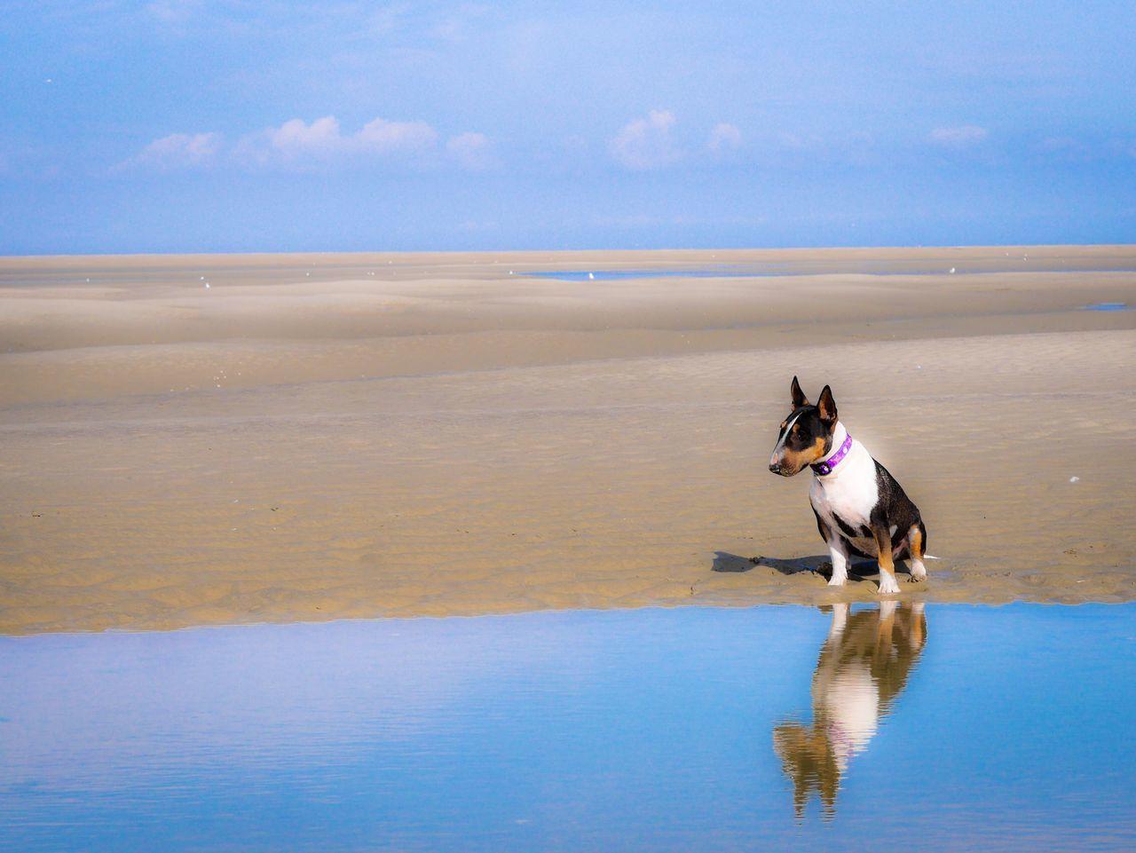 Bull Terrier Sitting At Sea Shore Against Sky