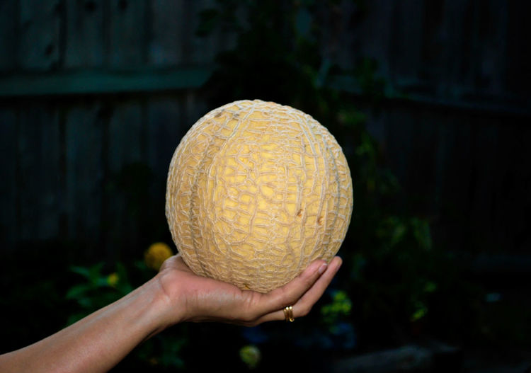Close-up of hand holding melon