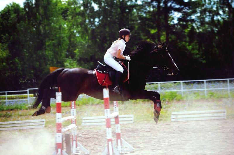 Йошкар-Ола 2014 Summertime Horse Horses