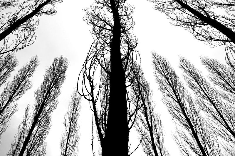 Autumn blues. NEM Black&white Minimalism TreePorn