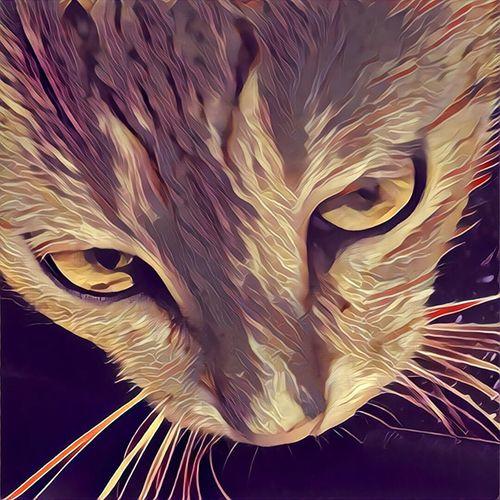 My cat mao First Eyeem Photo Cat Prisma Filter