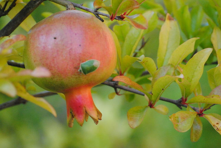Nature Animal Wildlife Fruit Photography