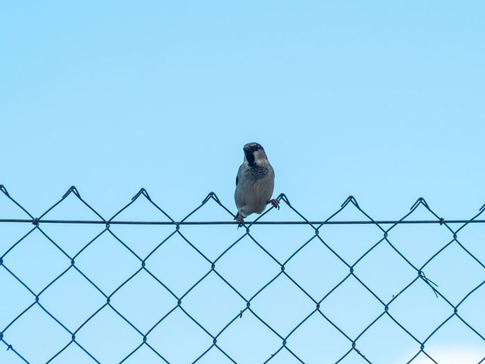 Bird perching on a fence against clear sky