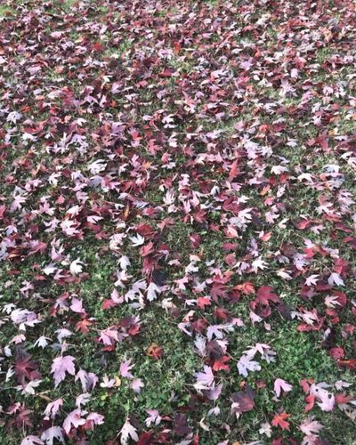 Nature Leaf Beauty In Nature Day Autumn Abundance No People Tranquility Flower Outdoors Growth Change Fragility Grass October Detail Photography