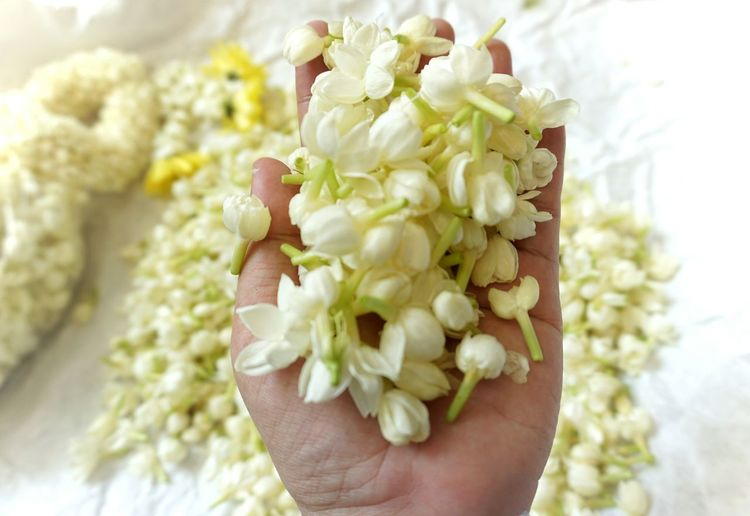 Close-up of hand holding white flower bouquet