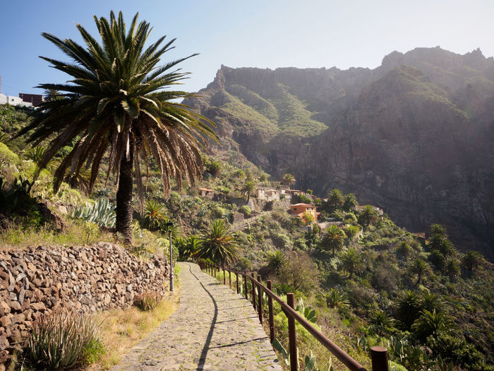 Masca village on Tenerife Canary Islands Hiking Landscape Masca Mountain Nature Outdoors Palm Path Rural Scenics SPAIN Stone Tenerife Tranquil Scene Tranquility Tree Village