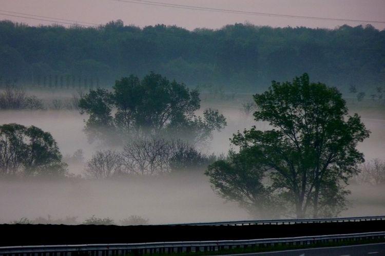 Foggy from KPJ