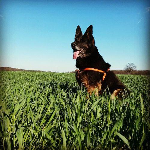 Picoftheday Picofthemoment Doglife Dog goodlifeweekendsunnocloudsspringflowersfieldbluesky