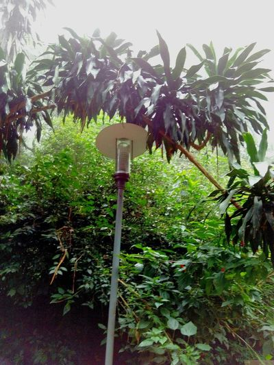 Street Lamp Leaves_collection Greenery Nature Photography Bangalore India