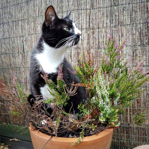 Cat in Flowerpot Curious Cat♡ Cat Lovers Cat Posing Outdoors Erica Cat Sitting Cat Watching Cat Portrait