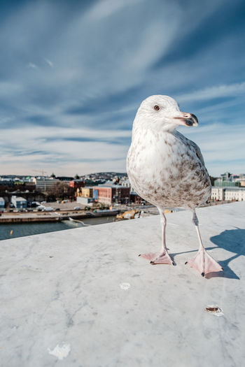 Bird Animal Themes Animal Vertebrate One Animal Animals In The Wild Seagull Animal Wildlife Cloud - Sky Sky Architecture Building Exterior Nature Built Structure Perching Day City No People Water Outdoors