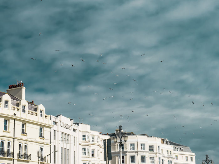 Color contrast in the city with more Seagulls. Brighton Cityscape Coastline Pastel Power Perspectives on Nature Seagulls Apartment Architecture Bird Building Building Exterior Built Structure City Citylife Cloud - Sky Contrast Day Flock Of Birds Flying Large Group Of Animals Lessismore Low Angle View Minimal No People Sky