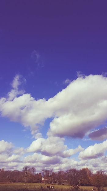 Blue Skies Blue Sky Blue Sky And Clouds Clouds Clouds And Sky Cows Nature Pasture Sky & Clouds Tees Ohio, USA USA Photos