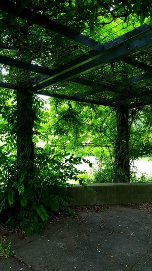 Secluded  Shade Canopy Leaves Vines Lush Foliage Urban Nature Urban Hiking Midsummer No People Greenspace Green Green Architecture Dense Vegetation Tangled Public Park Growth Humid Summer Day Louisville Kentucky
