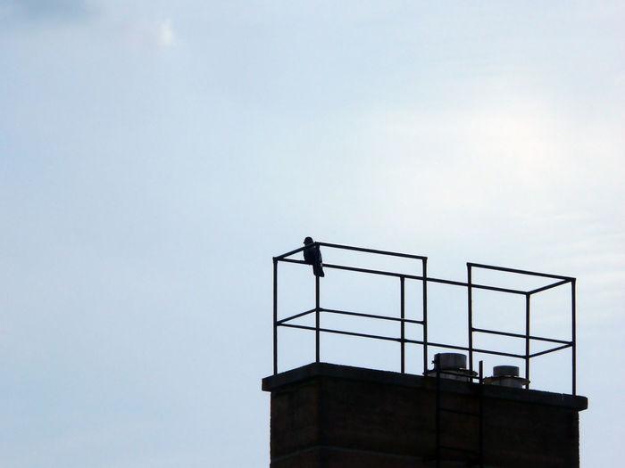 Pigeon perching