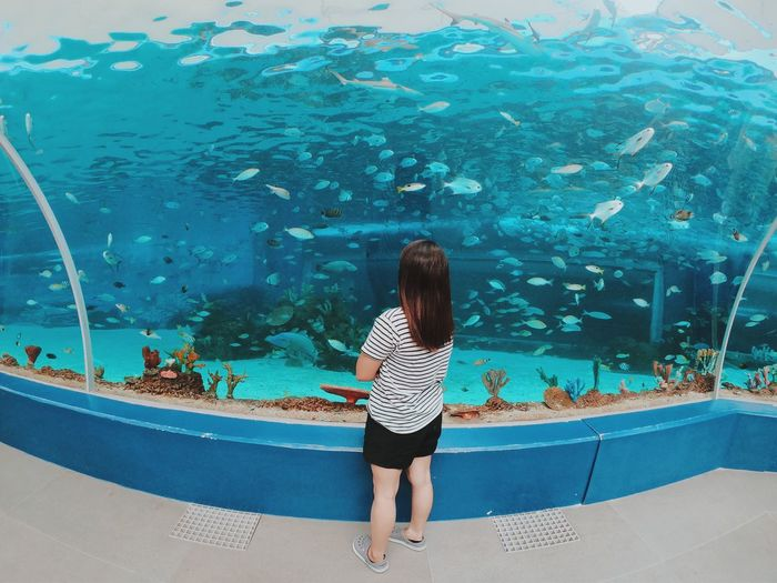 Rear view of woman standing in aquarium