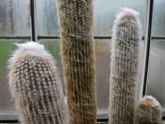 Fuzzy and prickly. The Five Senses Plants And Flowers