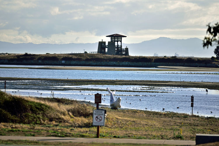 Middle Harbor's Shoreline Park 4 Shoreline Park Port Of Oakland,Ca. Middle Harbor Knoll Observation Tower Lookout Whale Sculpture Low Tide Mudflats Shallow Water Waterfowl Scenic Marine Headlands Mountain Range Landscape_Collection Landscape_photography NatureBeauty In Nature Nature_collection Clouds In The Sky Rock Spring Trail