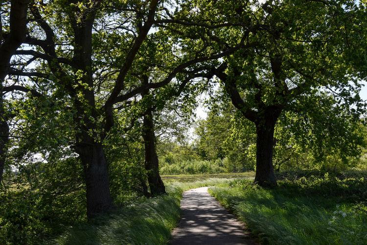 Dirt road amidst trees