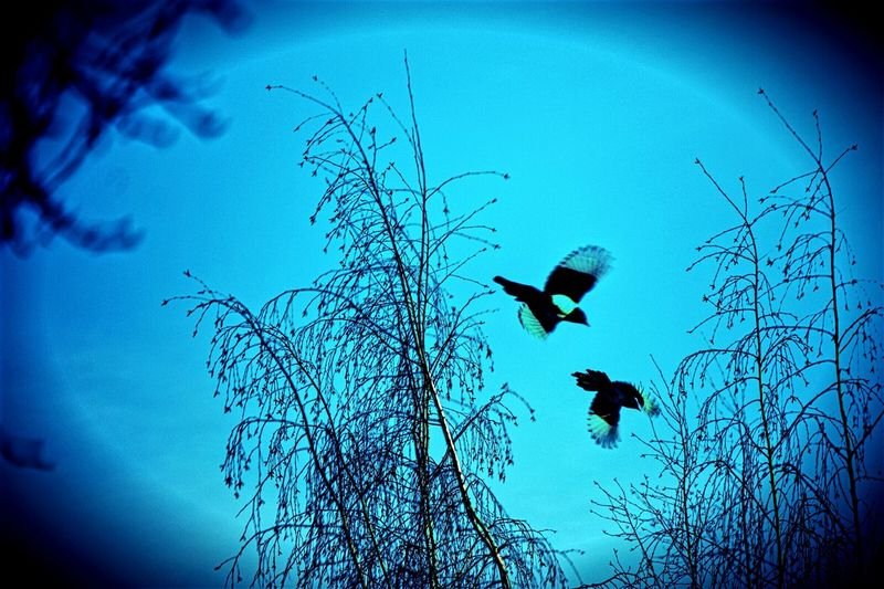 Birds In Flight birds Cold Temperature Motion Flyingbirds Fighters Showcase: January