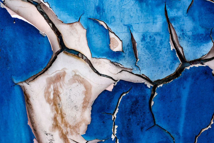 Blue No People Bone  Close-up Nature Day Animal Body Part Architecture Dry Tree Old Body Part Anatomy Animal Bad Condition Cracked Textured