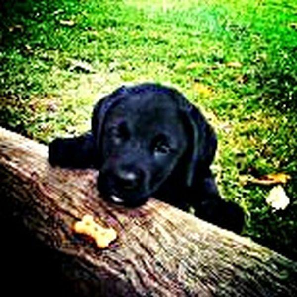 Pets Corner Lovepet♥ Doglover First Eyeem Photo