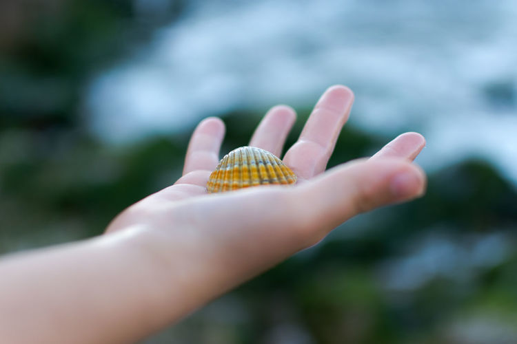 Cropped Image Of Hand With Seashell