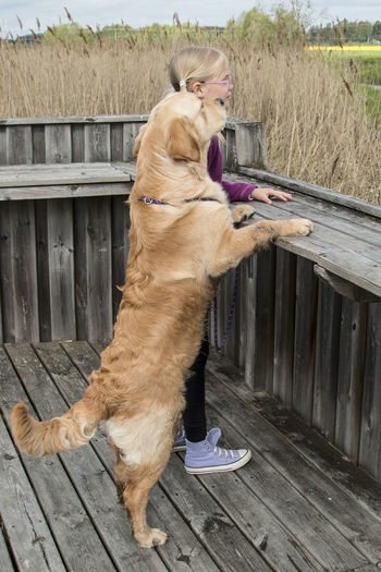 Golden retriever by girl standing by railing on floorboard