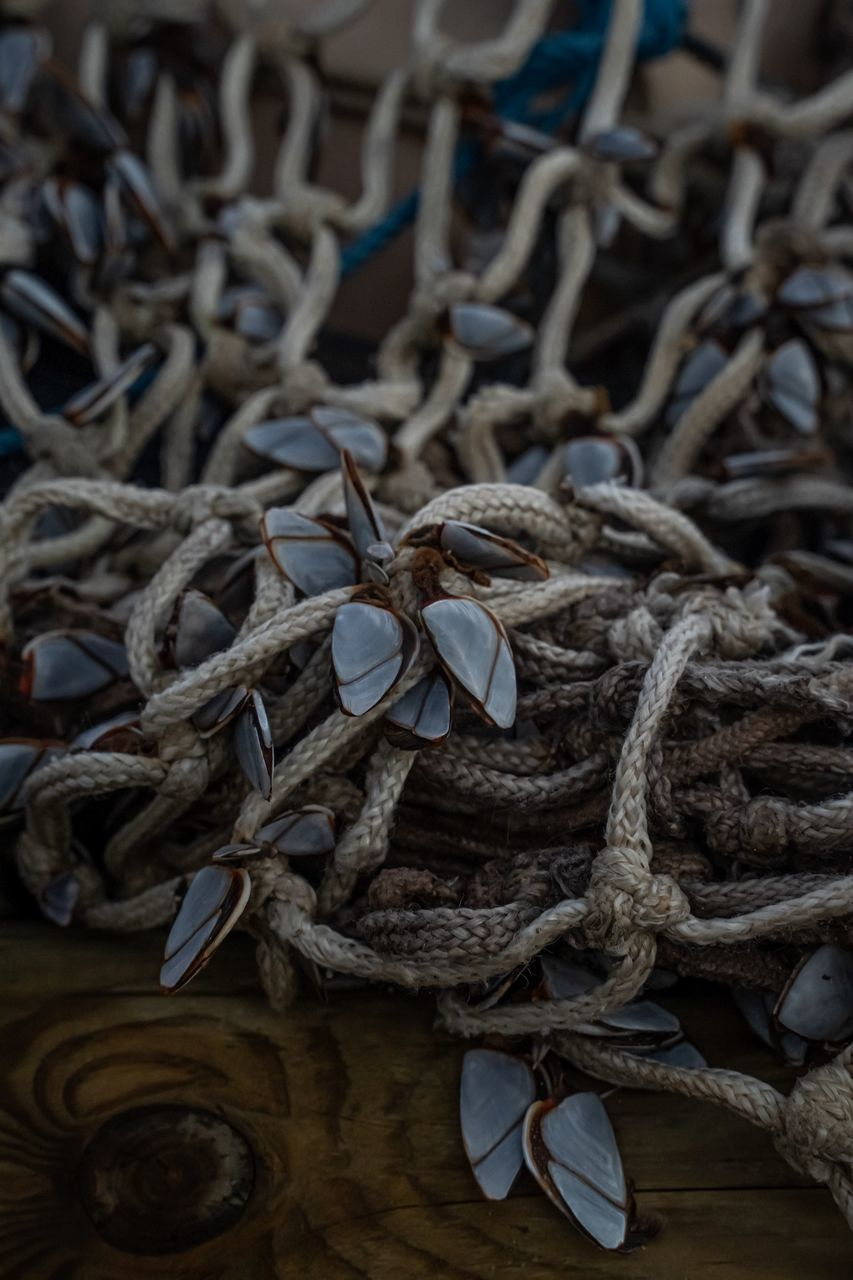 CLOSE-UP OF ROPE TIED UP ON WOODEN SURFACE