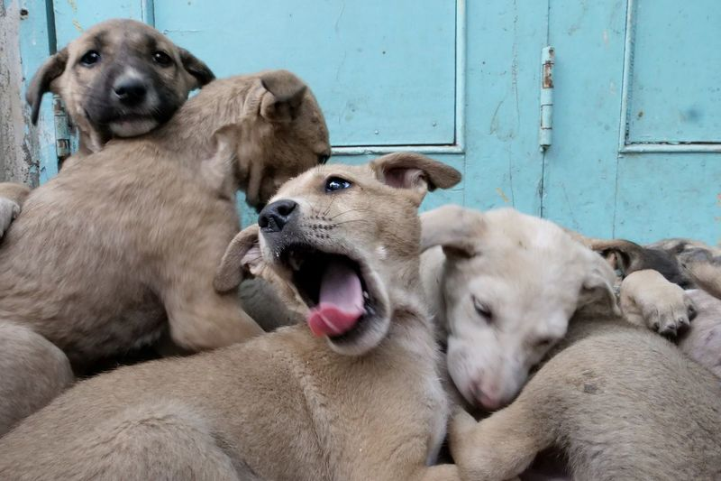 Close-up of puppies against blue door