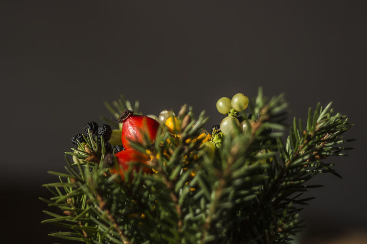 Close-up of orange flowers against blurred background